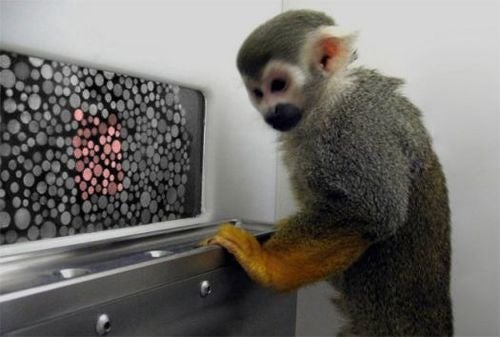Gene Therapy Has Color-Blind Monkeys Seeing Red (and Green)