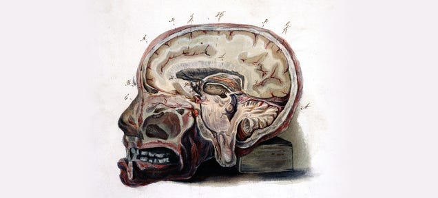 How Nature Can Mummify Your Brain