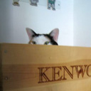 Recycle a Wine Crate into a Cat Perch