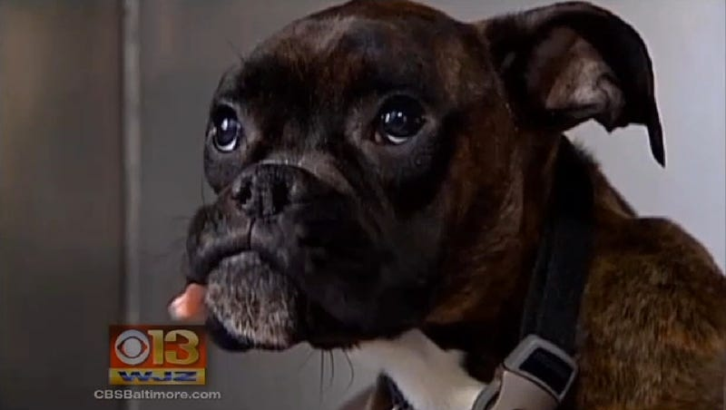 Hero Dog Survives 9 Days of Freezing Weather, Gets Hit By Car, Survives!