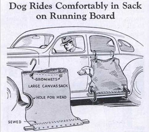 Best Auto Accessory Ever: Dog In A Bag