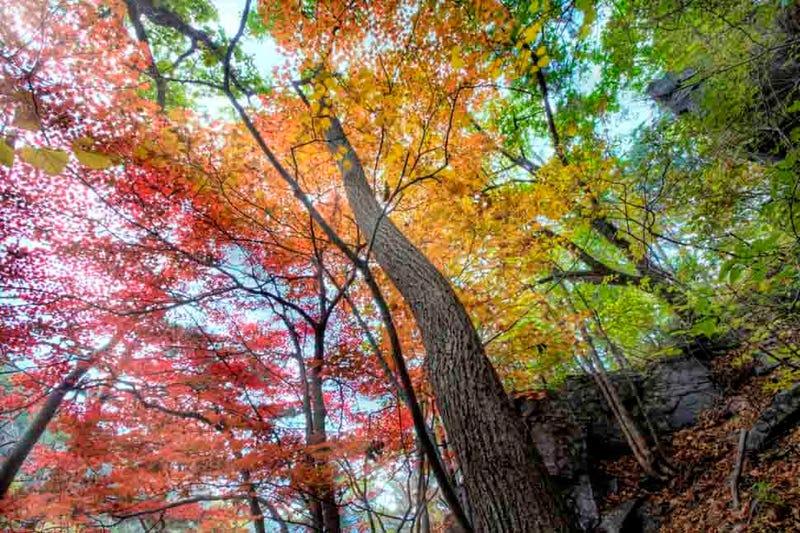 40 Stunning Photos Of Fall Foliage