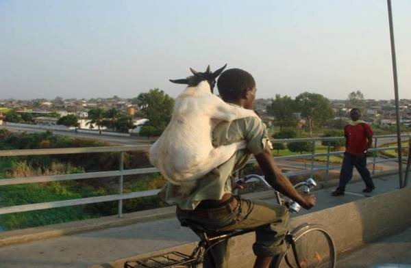 its almost the weekend - here have a goat