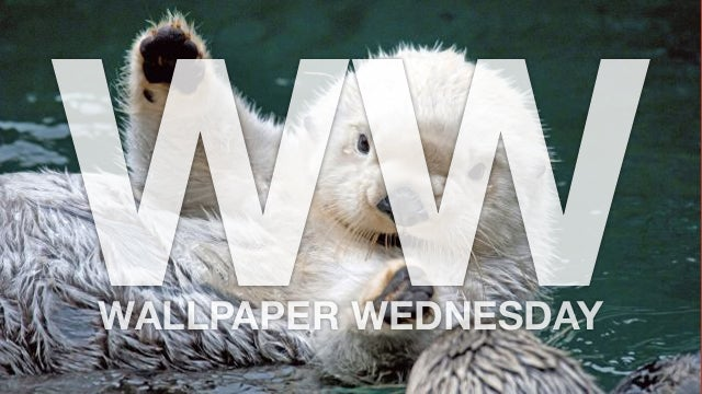 """Say """"Awwww"""" with These Baby Animal Wallpapers"""