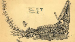 The 19th-Century Artist Who Sketched Fossils In T
