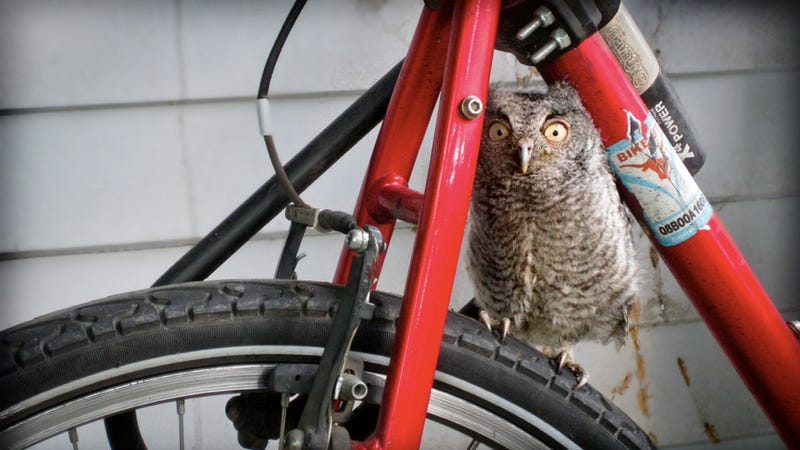 Bike owl is watching you!