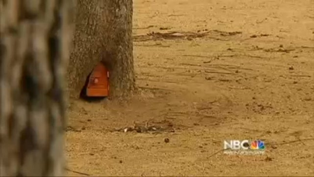 San Francisco Community Rallies Around Mysterious 'Elf Door' Found in Tree