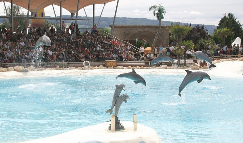 Dolphins Reportedly Overdosed On Heroin Substitute Fed to Them by Ravers