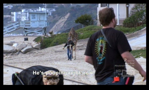 Demi Moore & A Giraffe Have A Fashion Orgasm With Rachel Zoe
