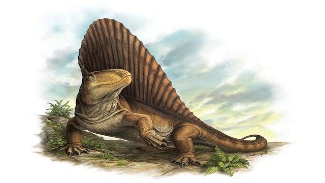 This prehistoric carnivore had teeth like steak knives