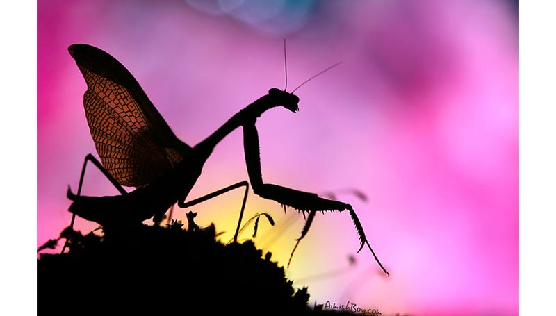 Can You Believe These Insect Fantasyland Photos Were Shot On Someone's Kitchen Table?