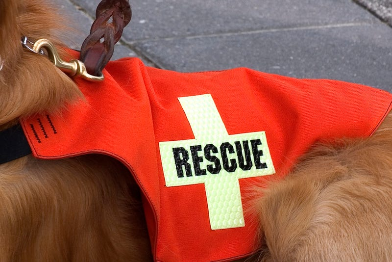 Dog Escapes Being Euthanized, Becomes Rescue Dog in Japan Landslides