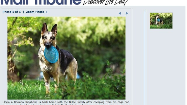 'Canine Houdini' Mounts Daring Escape From Medical Facility