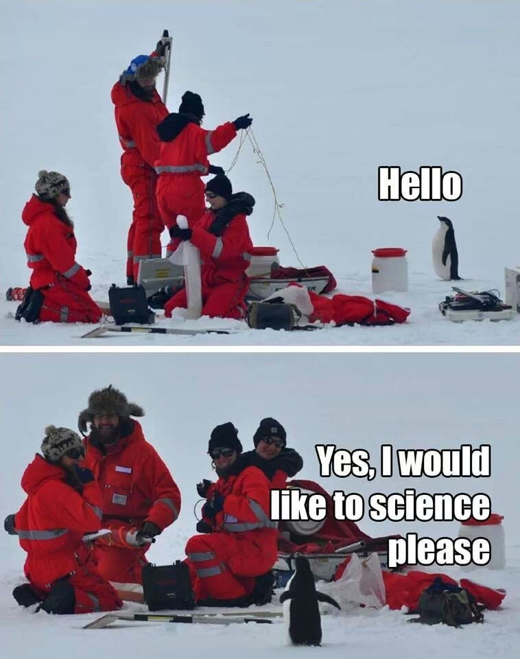 Why Aren't There More Penguins in STEM Fields?