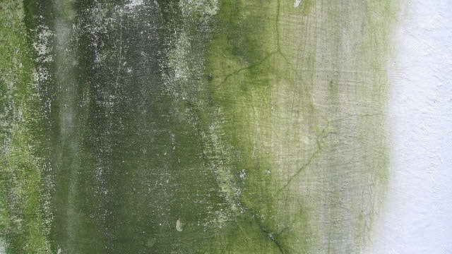 An Unintended Effect of Energy-Efficient Buildings: Toxic Mold