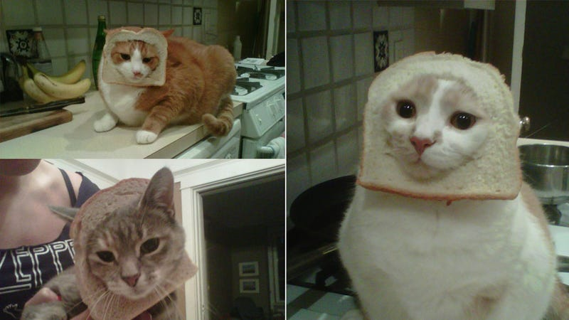 Hot New Internet Meme: 'Breading' Cats
