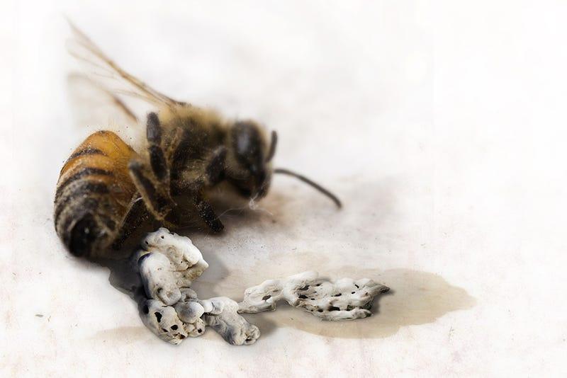 Concrete-Printing Bees And Other Living 3D Printers