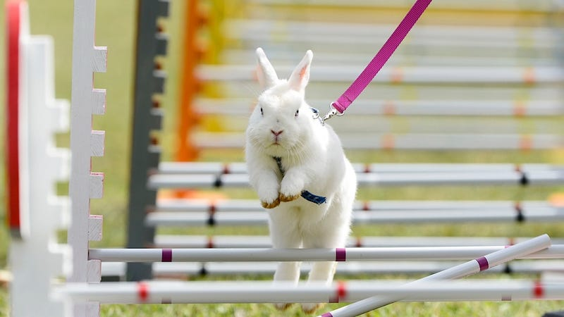 This Rabbit Clearly Had a Way More Productive Labor Day Than You
