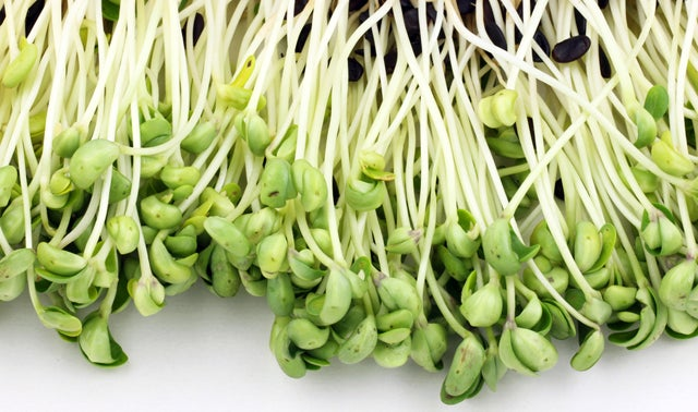 German Sprouts are the New Spanish Cucumbers