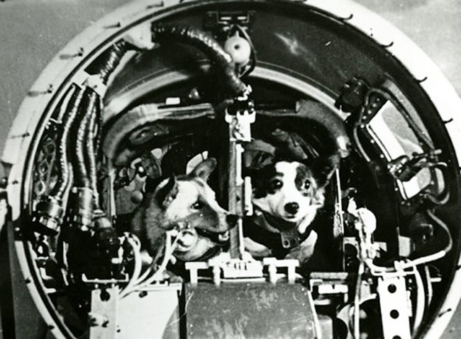 The First Animals In Space