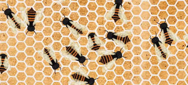 Why Hexagons Are The Best Building Block For Bees and Their Hives