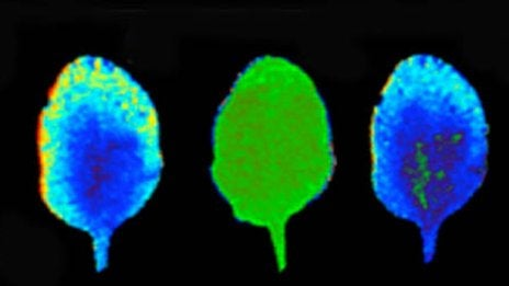 Plants can think and perform computations, say scientists
