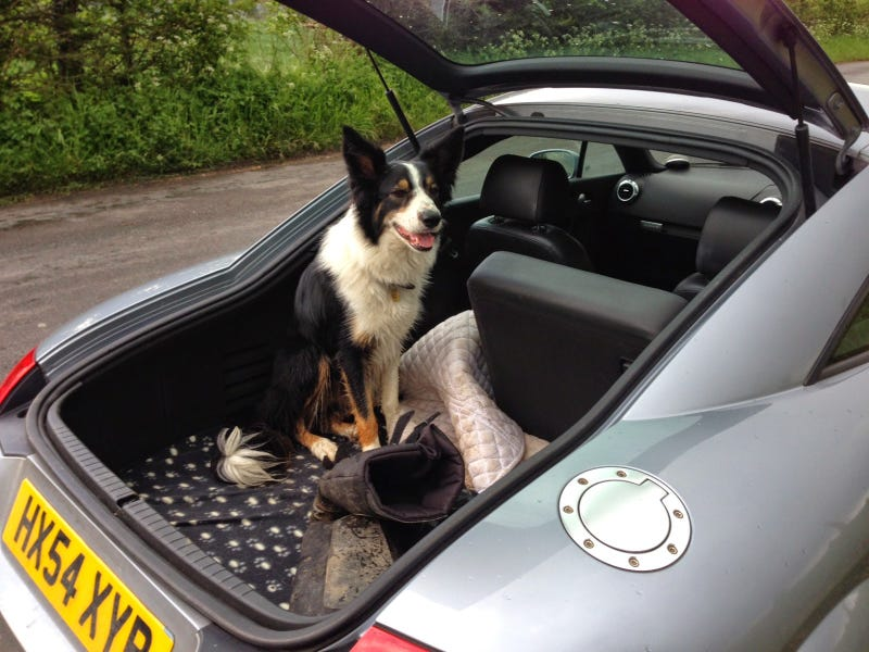 How To Choose A Car For Your Dog