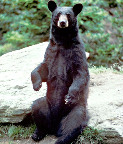 Hikers Gang Up on Kentucky Black Bear