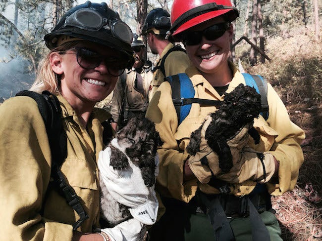 Newborn Mountain Lions Rescued from Montana Wildfire