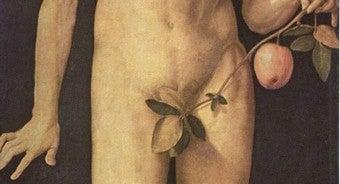 Genitals In Genesis