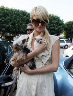 Paris Hilton Helps British Woman Lose Her Lunch