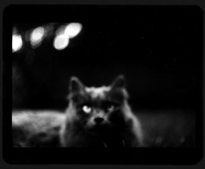 The Evil Magic Of Cats, Caught On Film