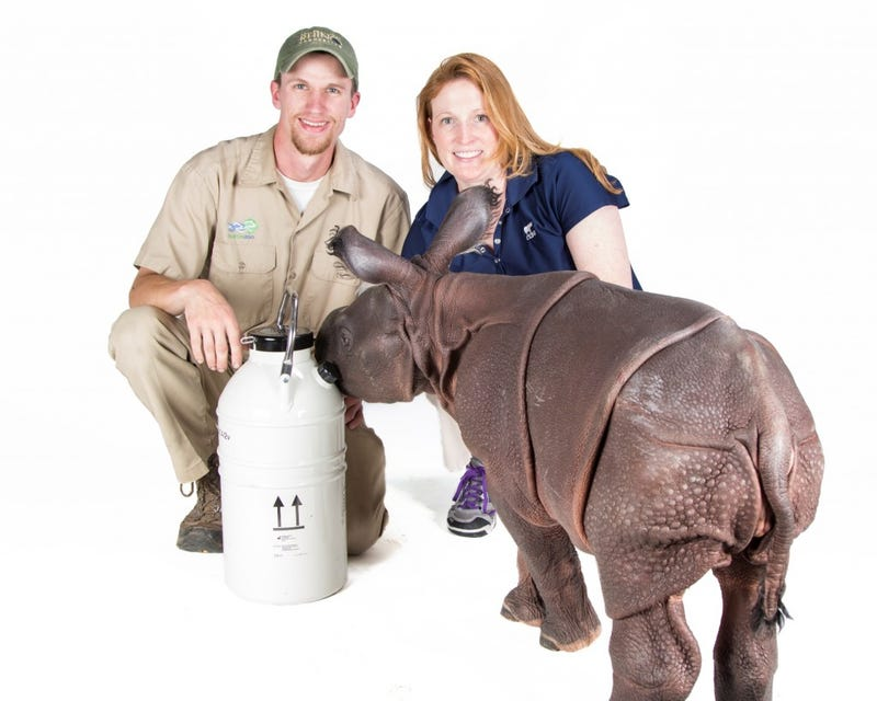 First Ever Baby Rhino Born From 10-Year-Old Cryogenically Frozen Sperm
