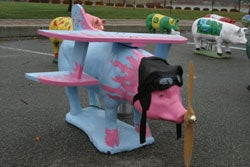 Swine Flu Fells Plane In Boston!