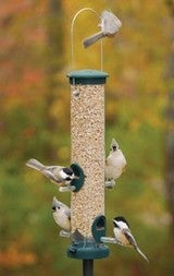 How to Turn Your Backyard into a Bird Refuge