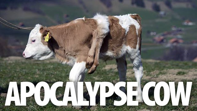 Six Legged Cow Is Born, End of the World Is Near