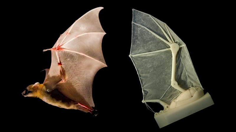 Robot Bat Wings Give Us a Glimpse Of the Future Of Vampires