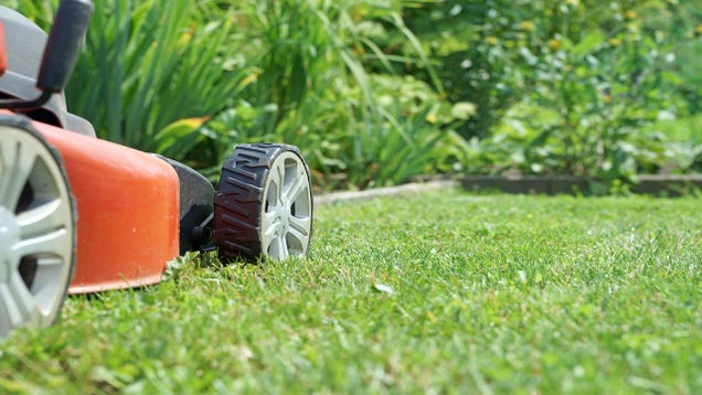 How often should you mow a growing lawn for How often should you mow your lawn