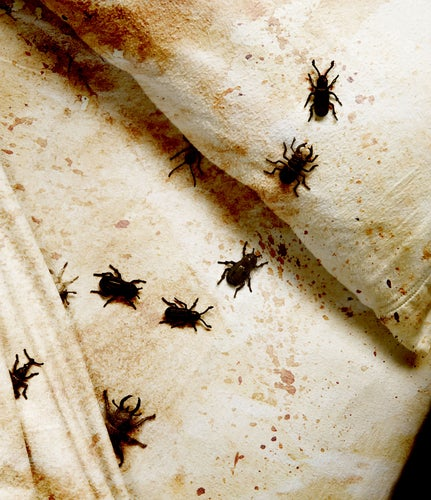 Survey: Bedbugs Prefer Democrats to Republicans