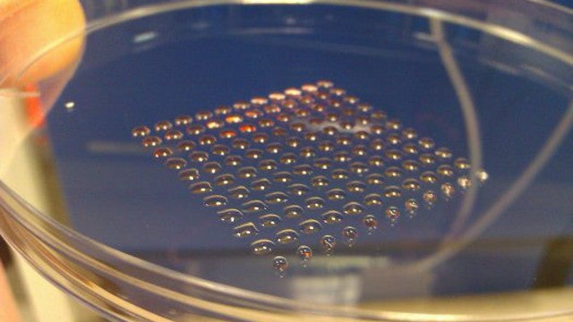 A 3D Printer That Generates Human Embryonic Stem Cells