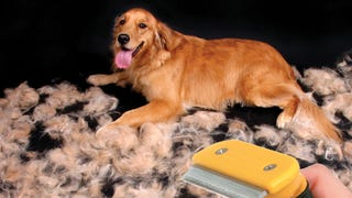 Pull Your Dog's Hair Out with the Pet Furminator