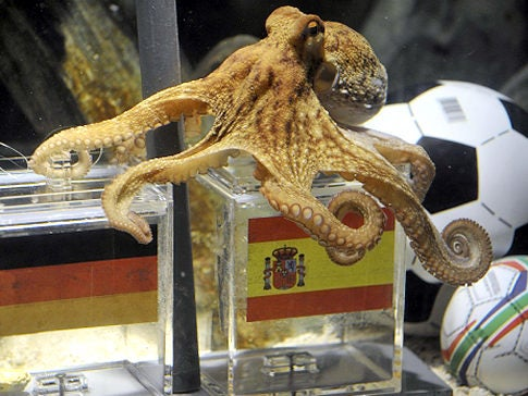 It's Official: Paul the Psychic Octopus Is a Real Psychic