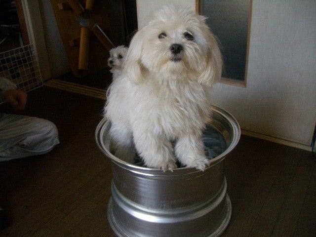 Deep Dish...Not Dog Dish...