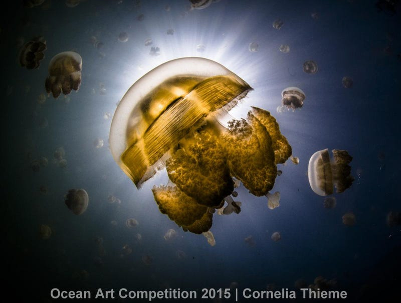 Ocean Art Photography Winners Show the Alien Beauty of Life Underwater