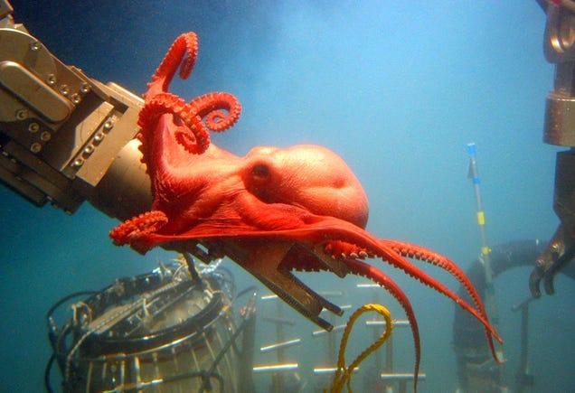 Así son las increíbles criaturas en las profundidades de los océanos 796833862610736457