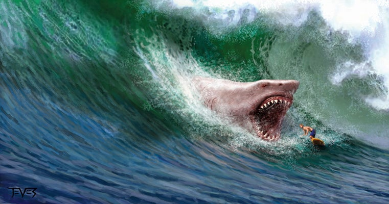 Largest Megalodon Fossil? - General Fossil Discussion - The Fossil Forum