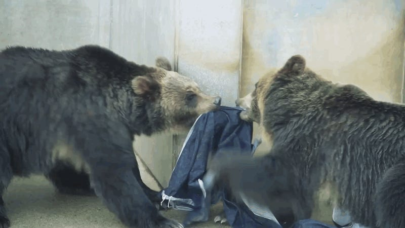 Your Next Pair of Jeans Could Be Designed by Lions and Tigers