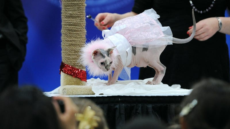 The Most Pissed-Off Cats From This Weekend's Cat Fashion Show