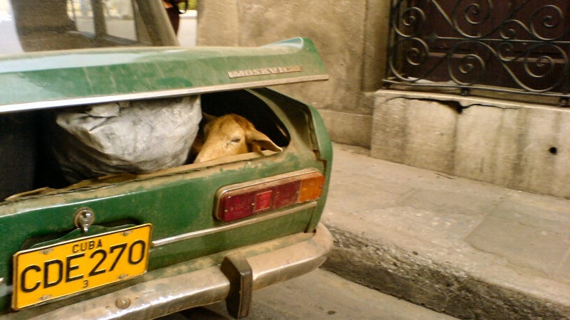 The Worst Animal Car Stories Of All Time