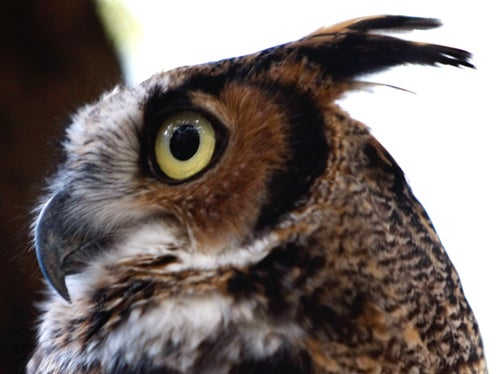 Harry Potter Inspires Owl Kidnapping Wave